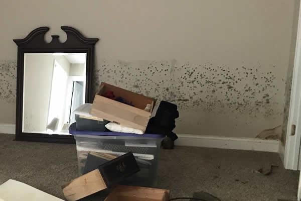 Mold Damage Insurance Claim NJ