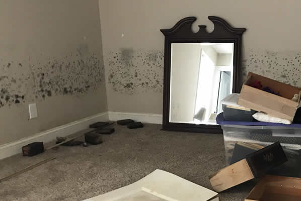 NJ Insurance Claim Adjuster Mold Damage