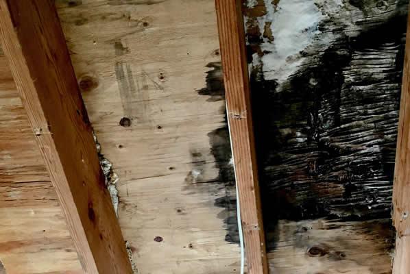 NJ Public Adjuster Mold Damage